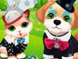 Games Kitten & the Dog